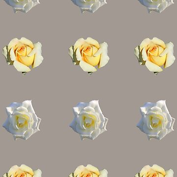 A Yellow Rose and a White Rose by STHogan
