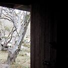 Looking out on snowgums by jayview