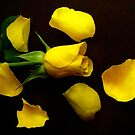 Yellow Rose With Decorative Petals  by hurmerinta