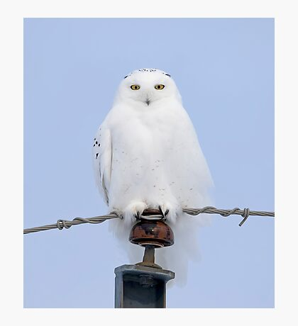 Snowy owl on the wire Photographic Print