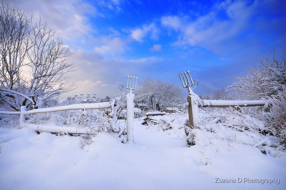 winter garden 2 by Zuzana D Photography