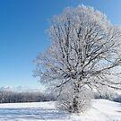 Winter Tree by Francesco Carucci