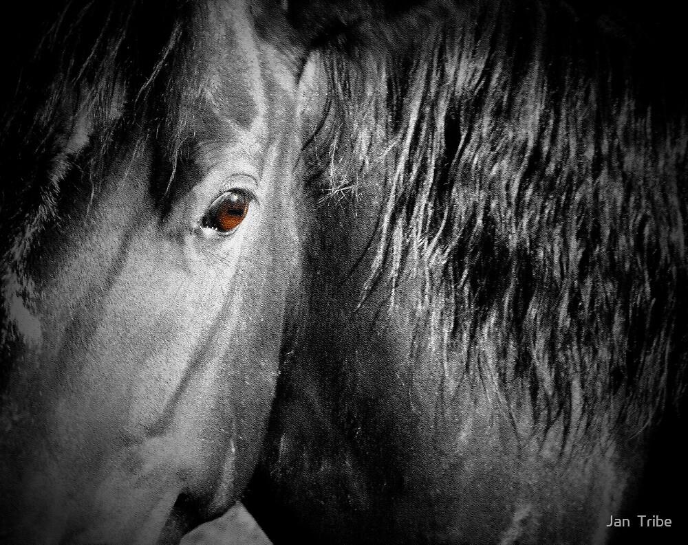 Brown Eyes  ~ Horse by Jan  Tribe