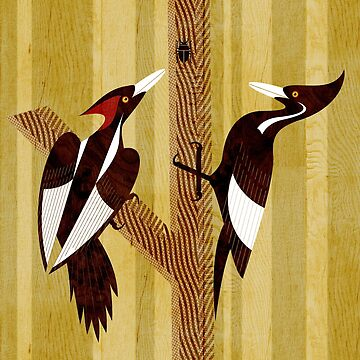 Ivory-Billed Woodpecker by scottpartridge