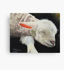 Precious lamb Canvas Print