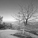Laureana Cilento: landscape with tree and road by Giuseppe Cocco