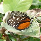Butterfly in the Garden by cjbenck