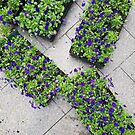 Trays of Purple Flowers by Jeanne Kramer-Smyth