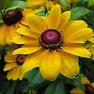 wundervoller Sonnenhut, Blume, Natur von rhnaturestyles