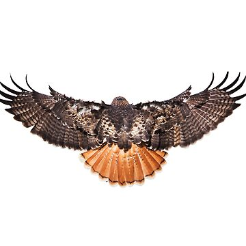 Redtail Hawk open wings totem spirit by TJBest