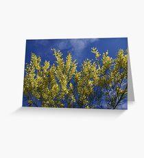 Sydney Golden Wattle Greeting Card