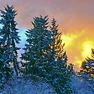 FROSTY SUNSET by Elaine Bawden