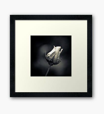 Acromatic Rose Framed Print
