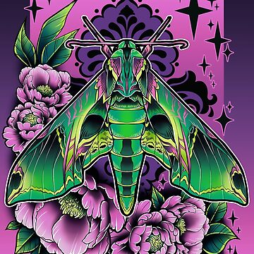 Sphinx Moth by retkikosmos
