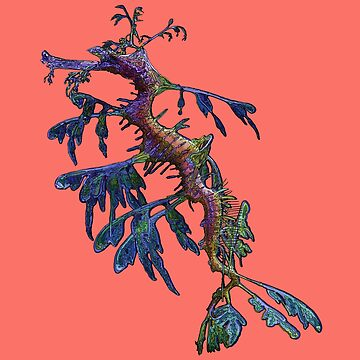 Leafy Sea Dragon on 'Living Coral' - Pantone's Colour for 2019 by AmandaMLucas