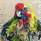 """Australian Rosella Bathing"" by Skye Elizabeth  Tranter"