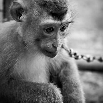 waiting monkey (black & white) by martybugs