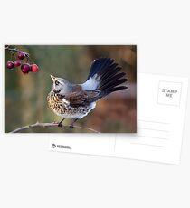 A Birdie's Tail... Postcards