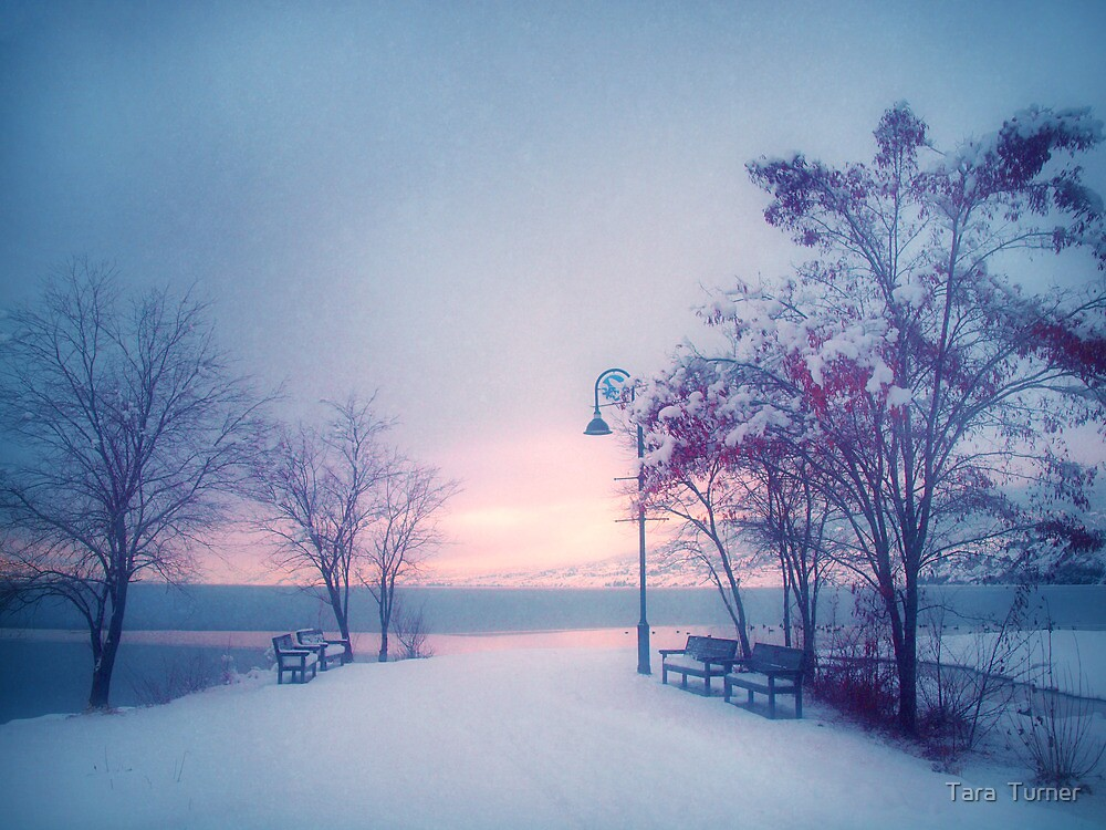 Winter Glow by Tara  Turner