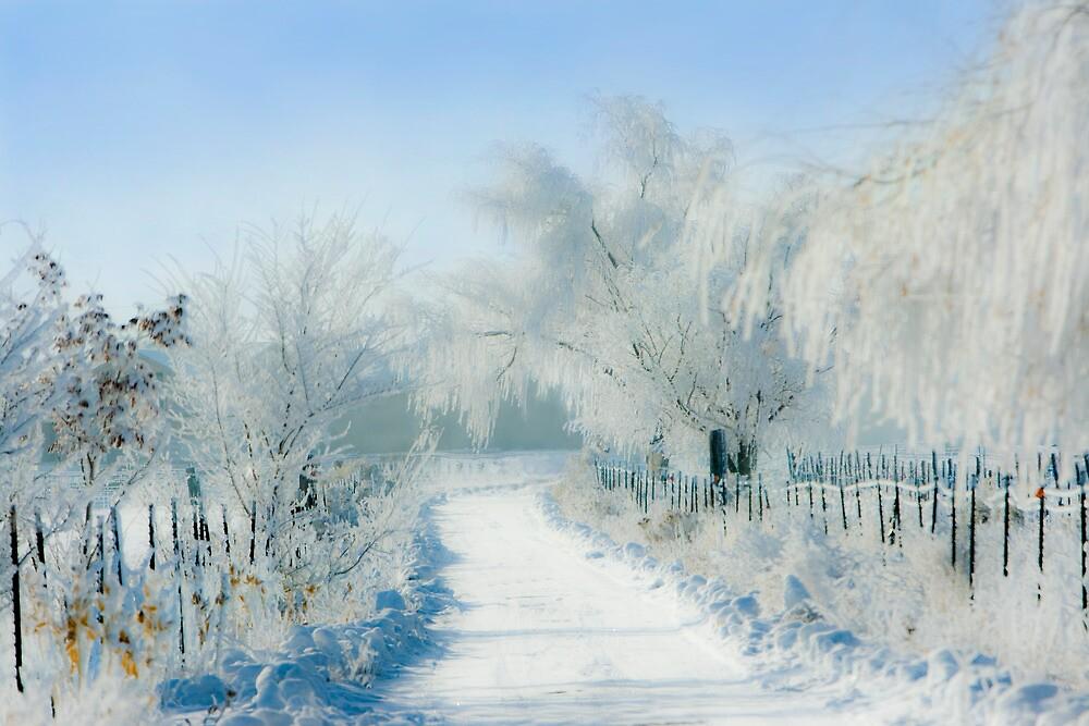 Winter Drive by Ken Fortie
