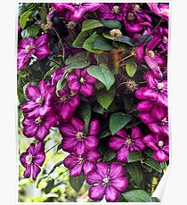 Flowing FLowers Poster