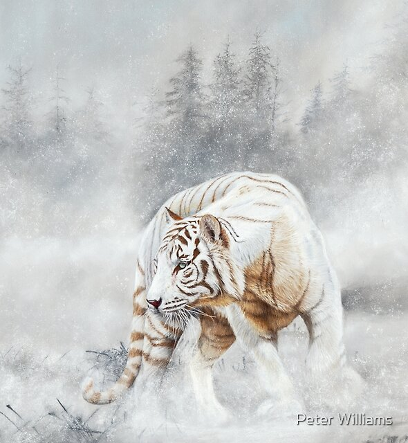 Snow Tiger - white tiger in snow - pastel painting by Peter Williams