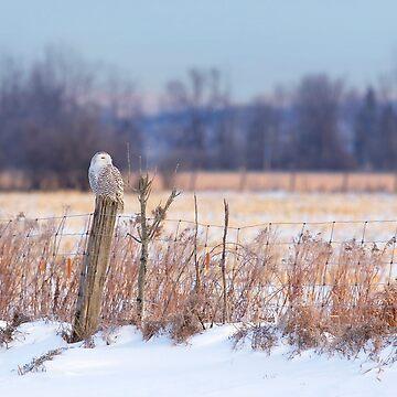 A snowy owl landscape by darby8