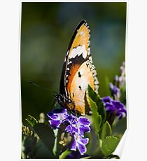 Danaid Eggfly or Mimic Butterfly (female) Poster