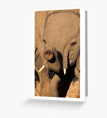 The Trunk Greeting Card