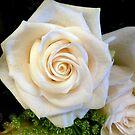 VANILLA-WHITE ROSE by Elaine Bawden