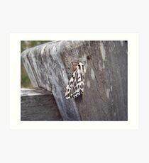 Black and White Tiger Moth (Spilosoma glatignyi) Art Print