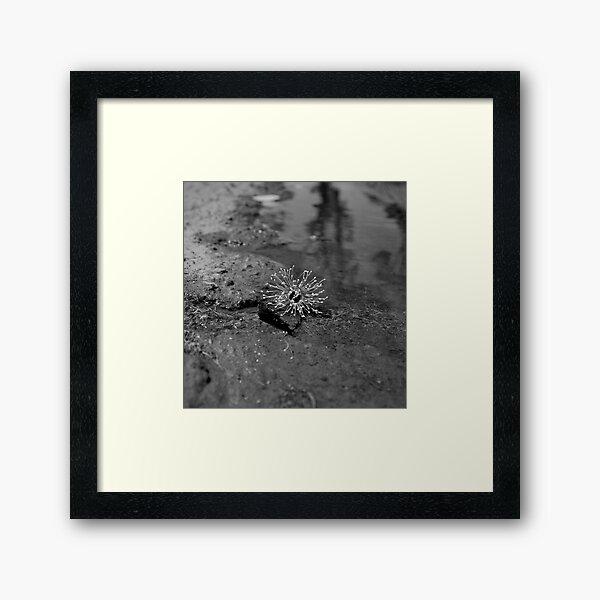Cast Framed Art Print