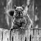 Hey, You With the Camera, Got Any Nuts For Me?  by Heather Friedman