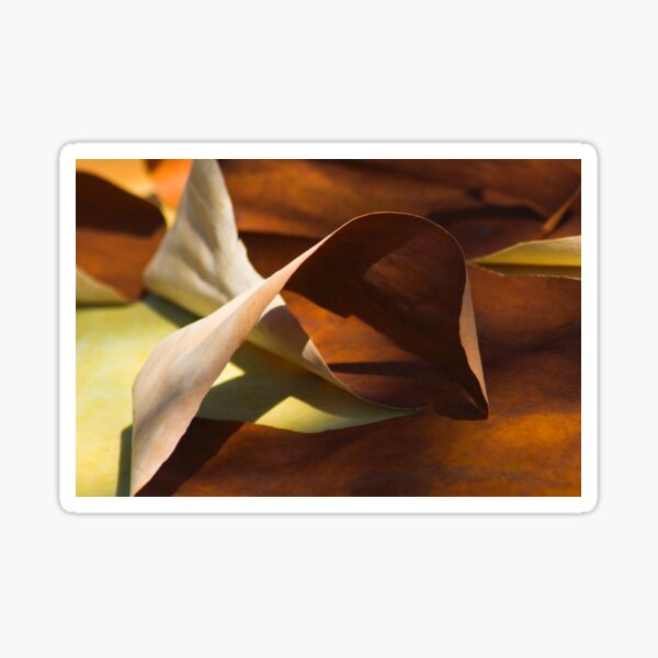Mobius strip Madrona bark abstract Sticker