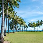 Tropical Palm trees Port Douglas by Martin Berry Photography