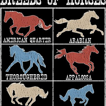 Breeds Of Horse Equestrian Facts by pbng80