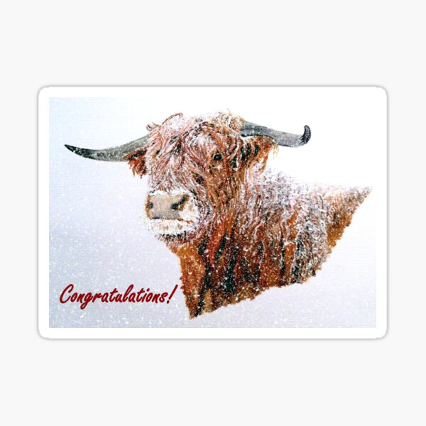 Snowy Highland Cow Congratulations Card Sticker