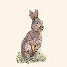 Rabbit by Dan Tabata