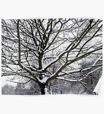 Winter Wonderland 3 Poster