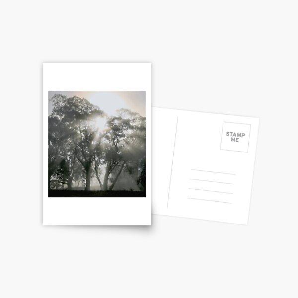 ~ Sunburst ~ Postcard