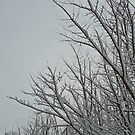 trees and snow by funkybunch