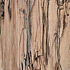 Fresh Wood by DonnaM