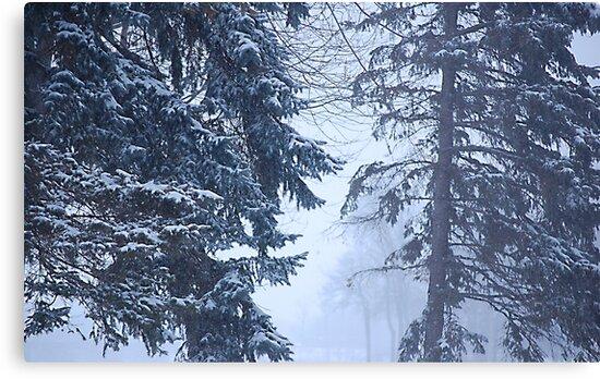 Winter Ghosts by Joanne  Bradley