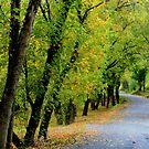 Rural Route 613 River Road by Linda Costello Hinchey