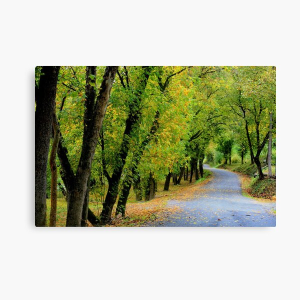 Rural Route 613 River Road Canvas Print