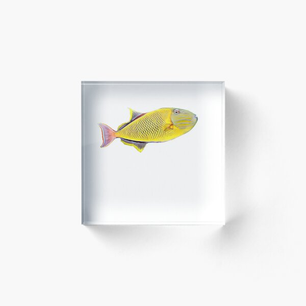 Crosshatch Trigger Saltwater reef aquarium fish tank  Acrylic Block