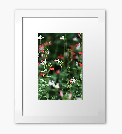 Sitting In The Garden Framed Print