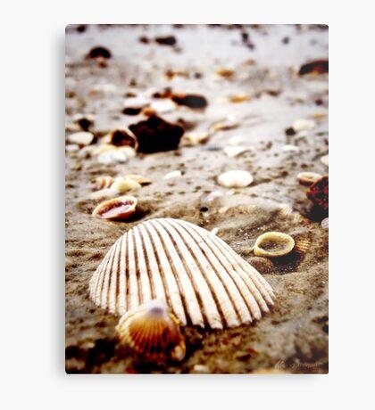 Krabi, Thailand   Seashells on the seashore Metal Print