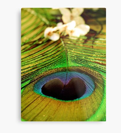 peacock feather beauty Metal Print