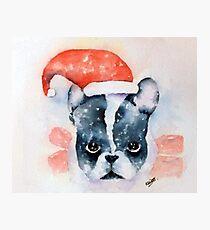 Santa Dog Photographic Print